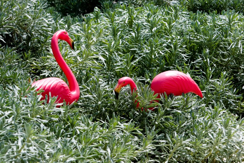 More flamingos.