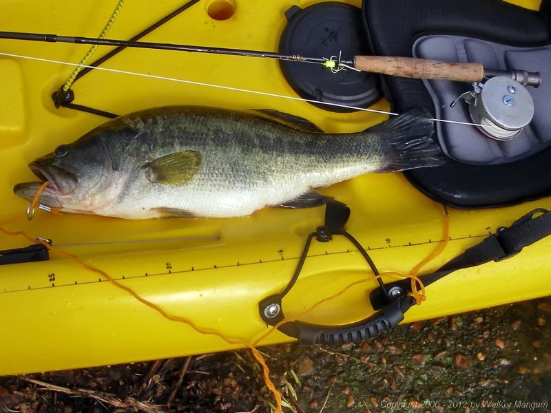 Largemouth bass - 20.5 inches - 5 lb. 4 oz.